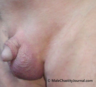 lion's shaved genitals